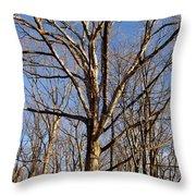 Winter White Oak Throw Pillow