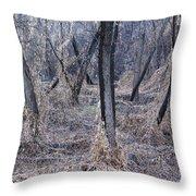 Winter Woods In Missouri 1 Throw Pillow