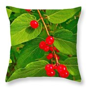 Winterberry Along Rivier Du Nord Trail In The Laurentians-qc Throw Pillow