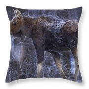 Winters Chill Throw Pillow