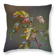 Winter's Oak Sapling Throw Pillow