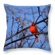 Winter's Red Beauty 5 Throw Pillow