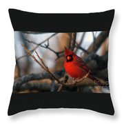 Northern Cardinal Red Beauty  Throw Pillow
