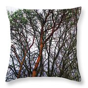Winters Trees  Throw Pillow