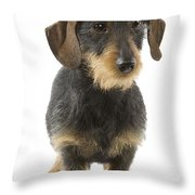 Wire-haired Dachshund Throw Pillow