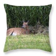 Wisconsin Doe Resting Throw Pillow