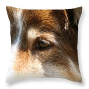 Wise Old Collie Eyes Throw Pillow