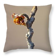 Witch Hazel Springtime Twig - Hamamelis Throw Pillow