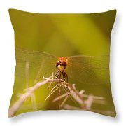 With Landing Gear Down  Throw Pillow