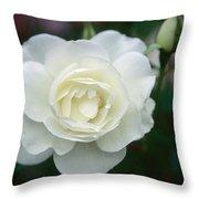 Withe Rose Throw Pillow