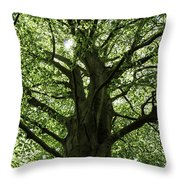 Witness Tree Throw Pillow