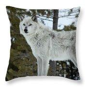 Wolf - Curiousity Throw Pillow