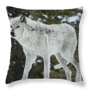 Wolf - Discovery Throw Pillow