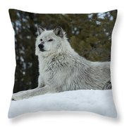 Wolf - Peaked Interest Throw Pillow