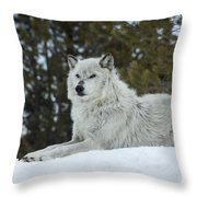 Wolf - Resting Throw Pillow