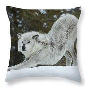 Wolf - Yoga Throw Pillow