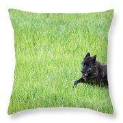 Wolf 889f Throw Pillow