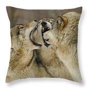 Wolf Display Throw Pillow