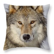 Wolf Face To Face Throw Pillow