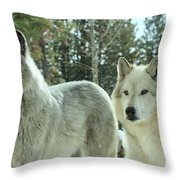 Wolf Gaze Throw Pillow