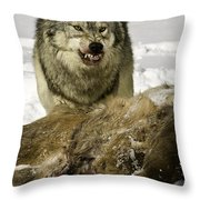 Wolf Protecting Kill Throw Pillow