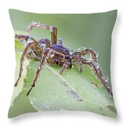 Wolf Spider In Dew  Throw Pillow