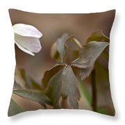 Wood Anemone Wildflower - Anemone Quinquefolia L.  Throw Pillow