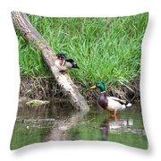 Wood Duck And Mallard Throw Pillow