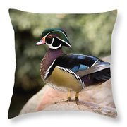 Wood Duck Drake In Breeding Plumage Throw Pillow