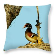 Wood Duck Drake In Tree Throw Pillow