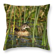 Wood Duck Drake Throw Pillow