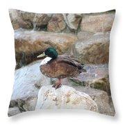 Wood Duck On Fountain Throw Pillow
