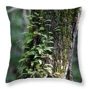 Wood Flora 2013 Throw Pillow