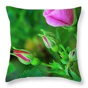 Wood Rose Buds Rosa Woodsii Wild Throw Pillow