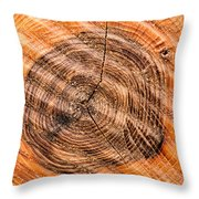 Wood Surface With Annual Rings Throw Pillow