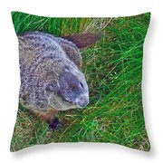Woodchuck In Salmonier Nature Park-nl Throw Pillow
