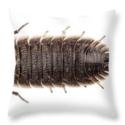 Woodlouse Species Porcellio Wagnerii Throw Pillow