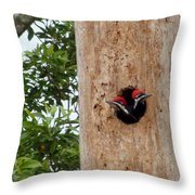 Woodpecker Babies Ready To Explore Throw Pillow