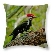 Woodpecker On A Limb Throw Pillow