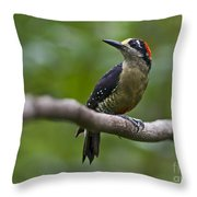 Woody Woodpecker.. Throw Pillow