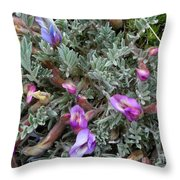 Woolly-pod Locoweed Closeup Throw Pillow