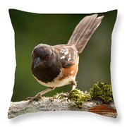 Worm Watch Throw Pillow