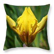 Wow The Dwarf Iris Throw Pillow