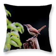 Wren - Carolina Wren - Bird Throw Pillow