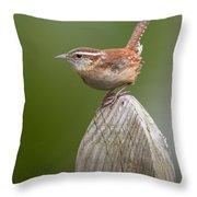Wren Chirping Throw Pillow