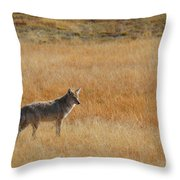 Wylie Coyote Throw Pillow