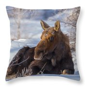 Wyoming Sunbathing Throw Pillow