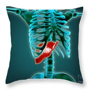 X-ray View Of Human Skeleton With Liver Throw Pillow by Stocktrek Images