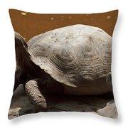 yawning juvenile Galapagos Giant Tortoise Throw Pillow