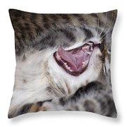 Yawning Kitten Throw Pillow